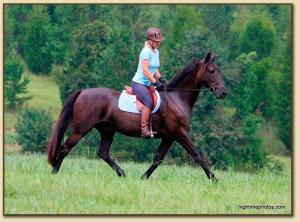 American Saddlebred Sport Horse