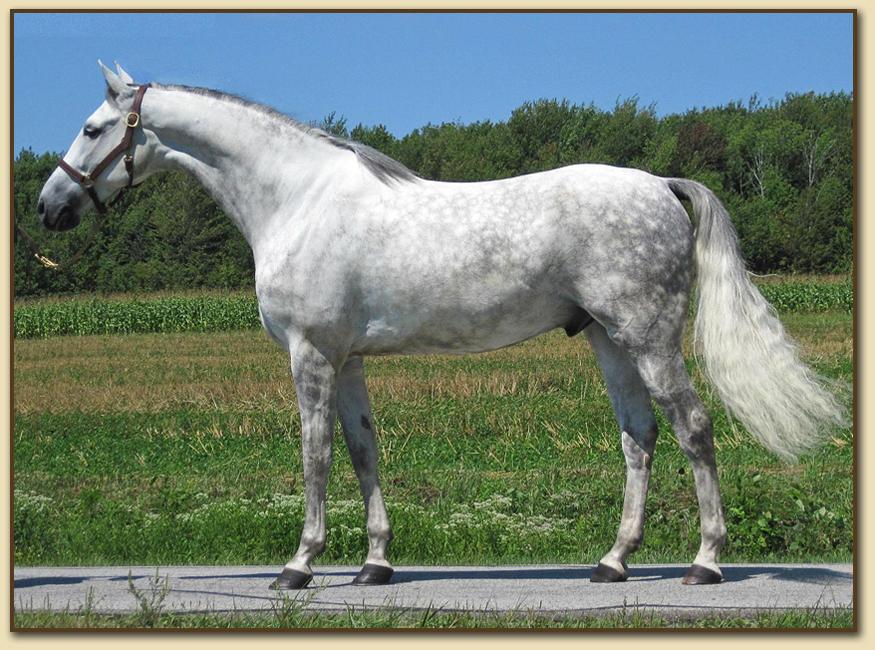 http://www.americansaddlebredsporthorse.net/wordpress/wp-content/uploads/2010/09/william_pendleton_4.jpg