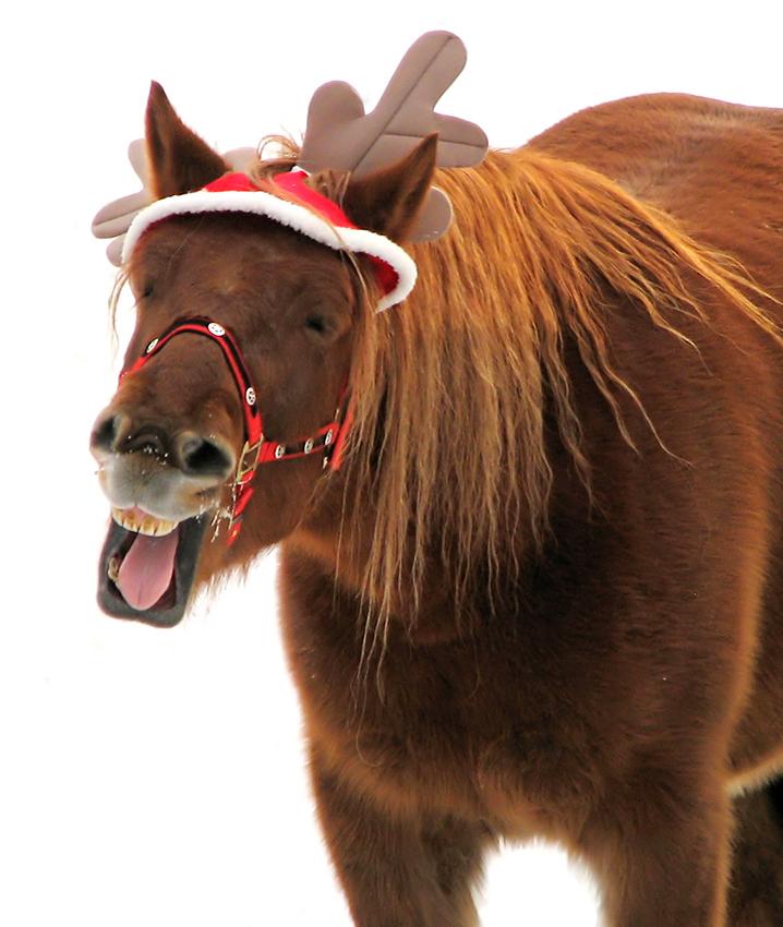 Saddlebred Sport Horse