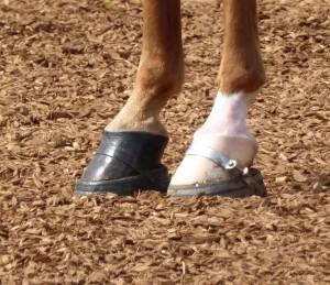 Feet 4